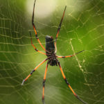 Salvarsi dalla dipendenza affettiva: 8 passi per  liberarsi dalla tela del ragno